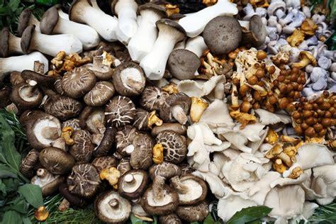 cucinare i funghi prataioli funghi ricette con i funghi come pulire i funghi e