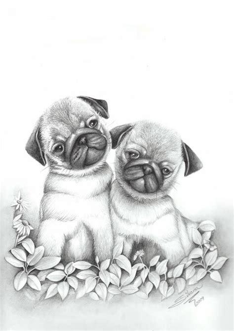 dibujos realistas a lapiz de color dibujo a lapiz de animales tiernos imagui cachorros