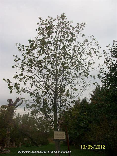 walt whitman quotes trees quotesgram