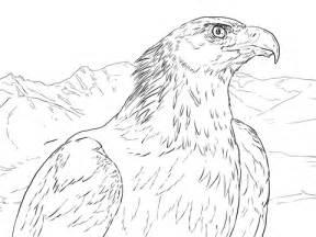 golden eagle portrait coloring page supercoloring com