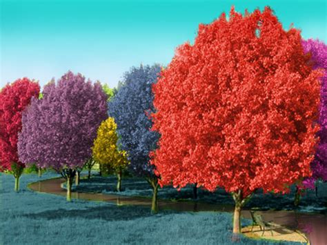 colored trees photoshop contests win real prizes photoshop tutorials