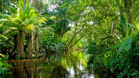 Most Beautiful Places In America by Travel To Amazonas Backpacking In Amazonas Kilroy