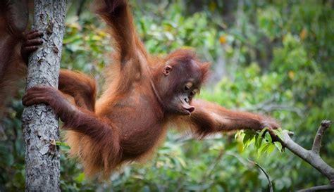 5 hal mengerikan yang akan terjadi jika indonesia tak lagi memiliki hutan boombastis