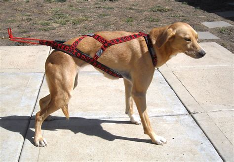 harness for dogs cart pulling harness breeds picture