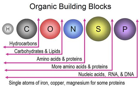 carbohydrates organic compound organic compouds quiz