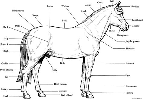 horse skeleton coloring page horse anatomy s16e4 coloring pages printable