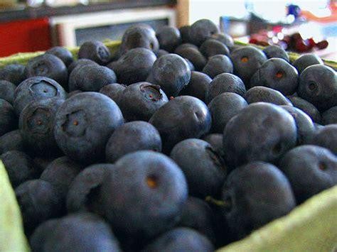 blue food nibbles of tidbits a food blogblue food archives nibbles of tidbits a food
