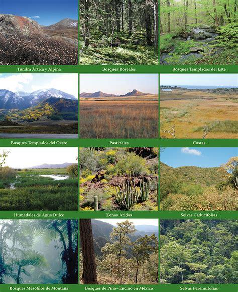 imagenes de habitats naturales partners in flight evaluaci 243 n de prioridades