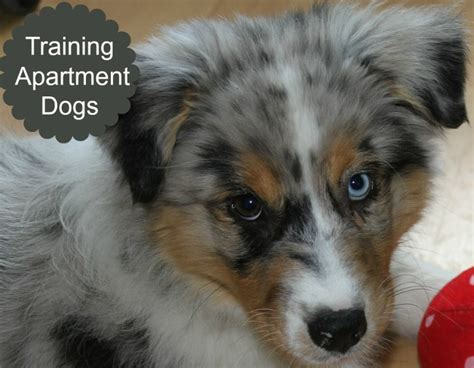 house training a dog in an apartment five ways to make your apartment dog friendly dog vills
