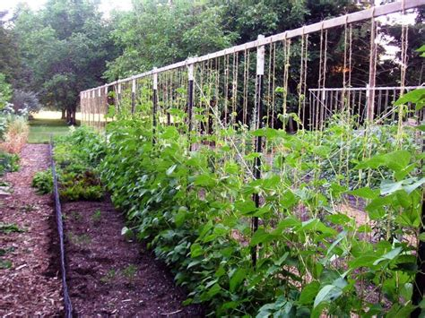 Vegetable Garden Trellis Ideas Trellis Ideas For House Awesome House