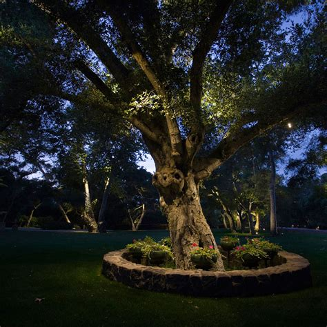 outdoor lighting for trees focal points