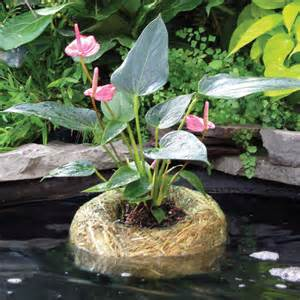 summit barley straw planter for non submerged pond plants