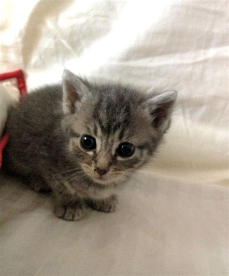 3 week old kitten but i love you little kitty pinterest