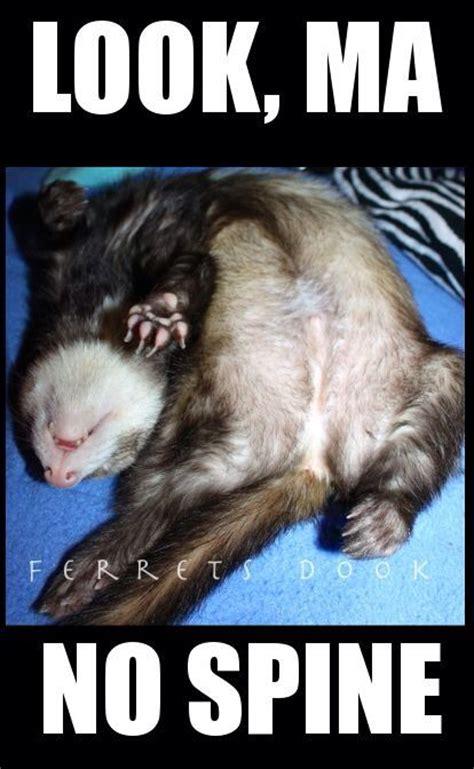 Cuddle Me Hybrid Swadlepod Baby Blue 1 369 best everything ferrets images on ferrets