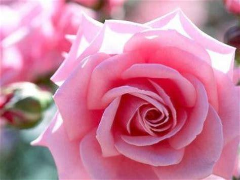 imagenes de flores que digan para ti flores barranquilla flores para cada ocasi 243 n