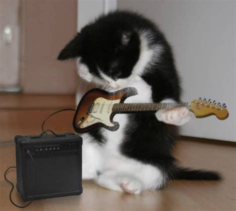 Sound Gitar Blazer Seniorennet Grappig Of Schattig Jazzy Poes