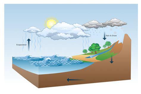 a diagram of the water cycle water cycle diagram drawing illustration drawing a