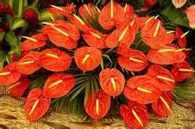 Pupuk Untuk Bunga Sri Rejeki beautifullflowers