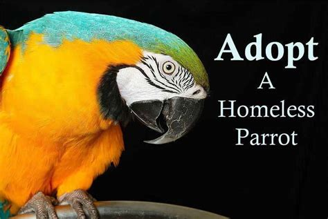 adopt west los angeles bird club