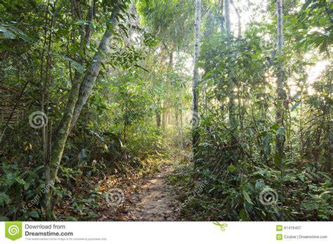 jungle light jungle pathway in morning light stock photo image 61416407