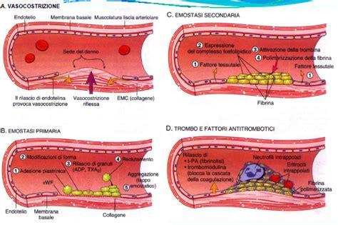 test di aggregazione piastrinica emostasi e test della coagulazione pills times