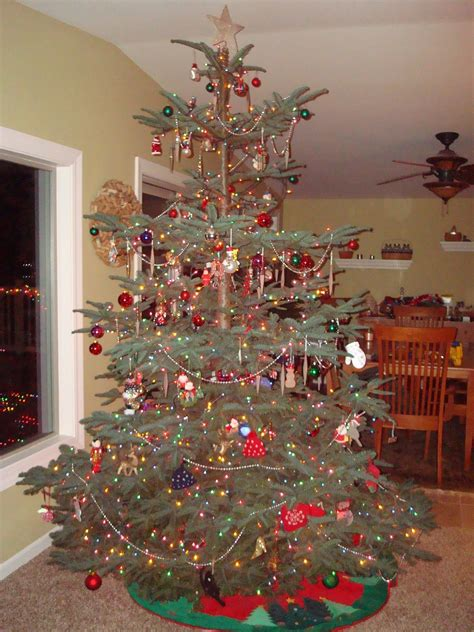 fir christmas tree ideas noble fir tree i the layered branches for decorating o tannenbaum