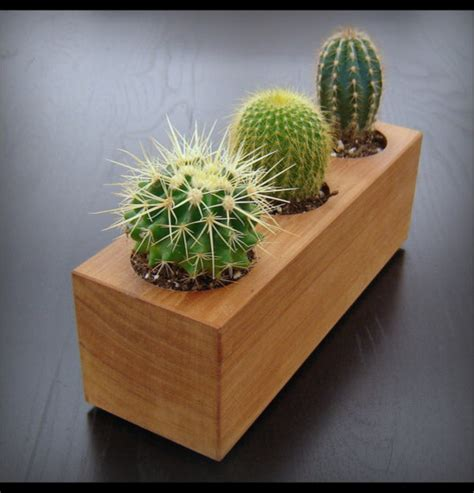modern cactus planter in reclaimed cedar by andrew s
