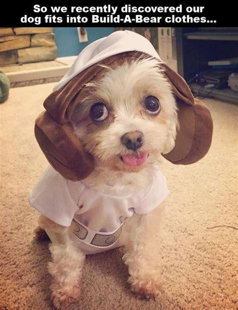 puppies make me happy puppies make me happy barnorama