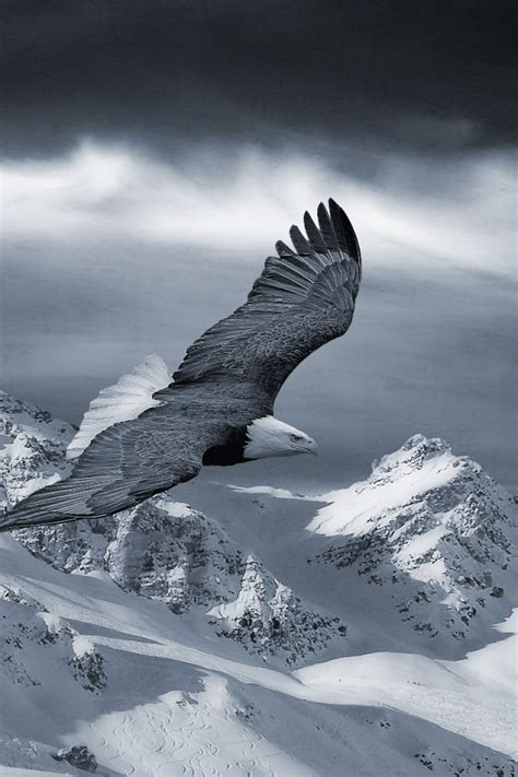 wallpaper iphone eagle eagle wallpapers images photos pictures backgrounds