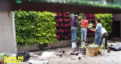 plantas boas para jardins verticais flores cultura mix