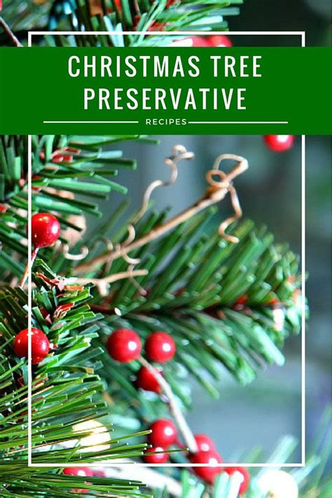 xmas tree preserver diy tree preservative recipes seasons trees and trees