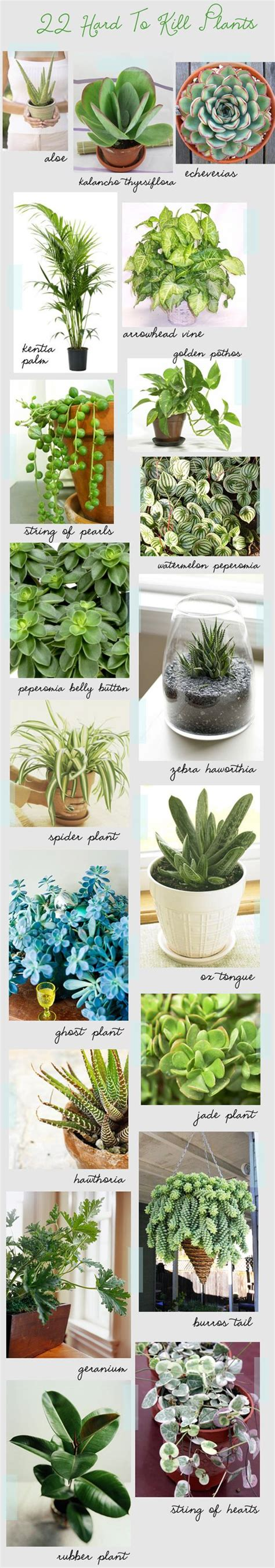 types of indoor plants 25 best ideas about types of cactus on pinterest cactus