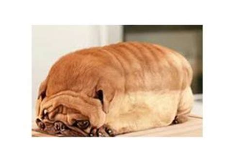 pug bread loaf that looks like pug that looks like a loaf of bread car tuning optical illusions page 4 singsnap karaoke
