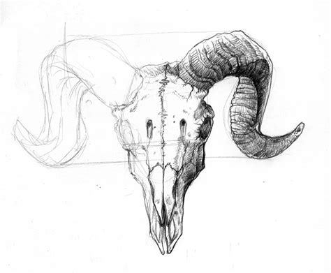 ram skull tattoo ram skull since i skulls and am an aries