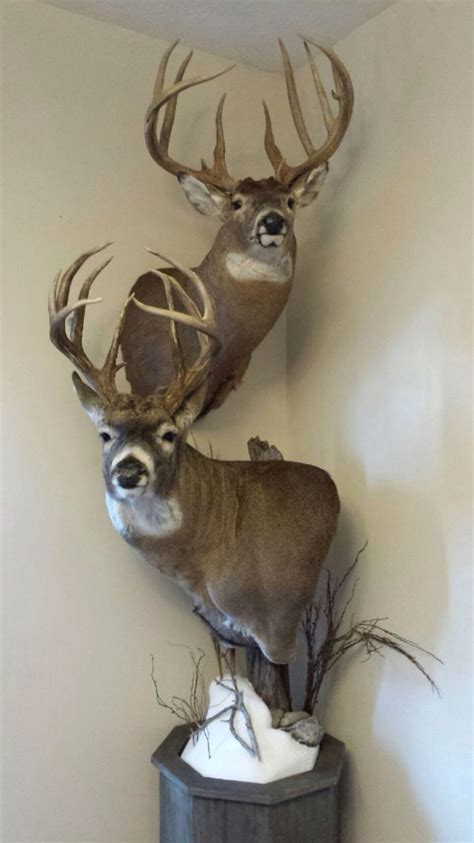 Whitetail Pedestal Mount Ideas whitetail pedestal mount ideas related keywords