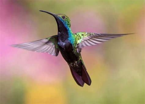 can i install hummingbird flying on a christmas tree can birds fly backwards bird