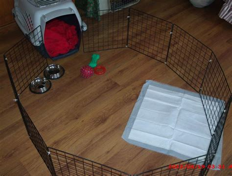 Puppy Crate In Bedroom Or Not dol great dane forums potty equation