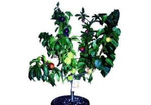 When Do Citrus Trees Bear Fruit - fruit salad trees bear 6 different kinds of fruit on one plant inhabitat green design