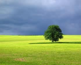 1280x1024 landscape tree desktop pc and mac wallpaper