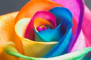 color flower color flower wallpaper opera add ons