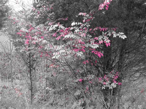 pink leaves on tree by blurazqt on deviantart