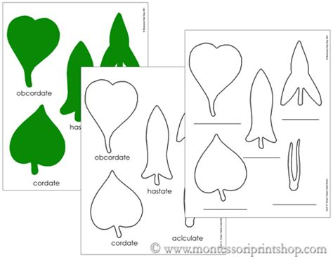 montessori printable files botany cabinet control sheets montessori sensorial cards