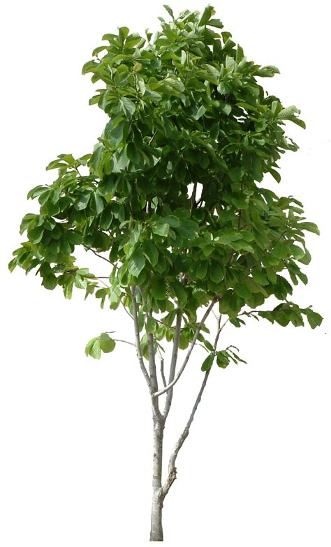 Free Trees - hd tree png cool tree images free picturespider