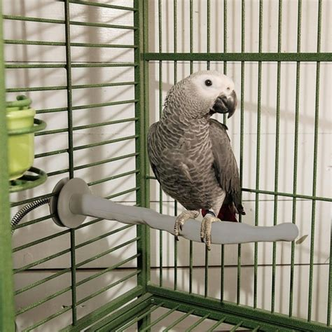 k h pet products k h thermo perch bird perches