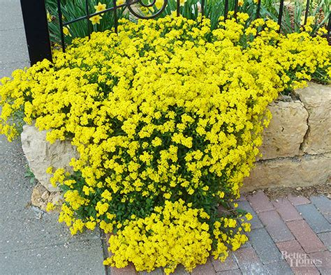 how well would a plant grow yellow light best plants for rock gardens