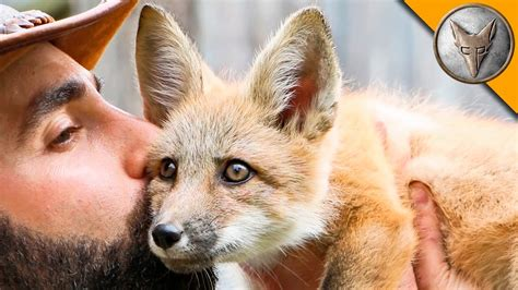 get rid of foxes in backyard 100 get rid of foxes in backyard fennecfoxes net