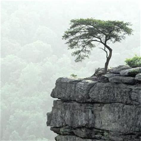 imagenes de paisajes sad fotos de 225 rboles florpedia com