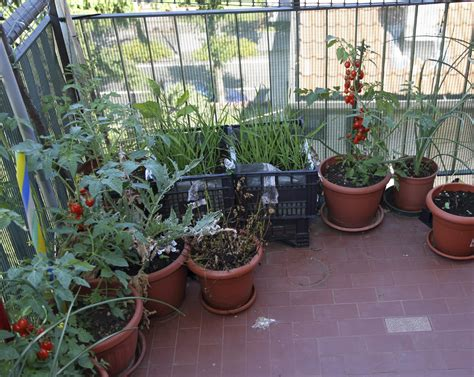 gardening in apartments how to grow a garden in an