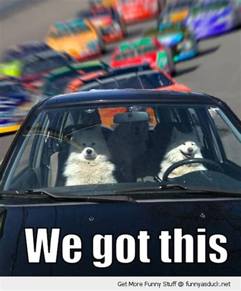 Funny Cing Meme - no problem dawg car memes and funnies pinterest