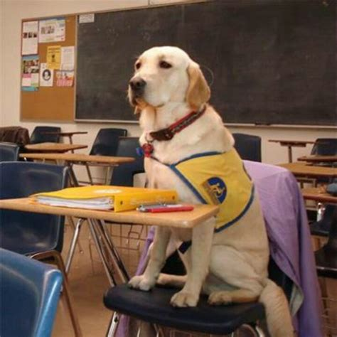 school for dogs going to school lab alert